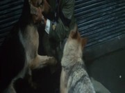 Curse of the God Dog (1977) Inugami no tatari